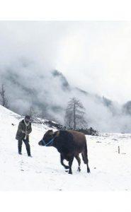 הקור של קלאנדאר | קולנוע טורקי חדש