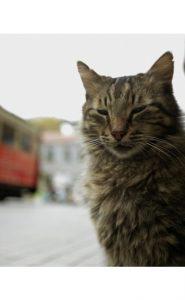 קדי – החתולים של איסטנבול | קולנוע טורקי חדש