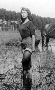 האורז המר | קולנוע איטלקי