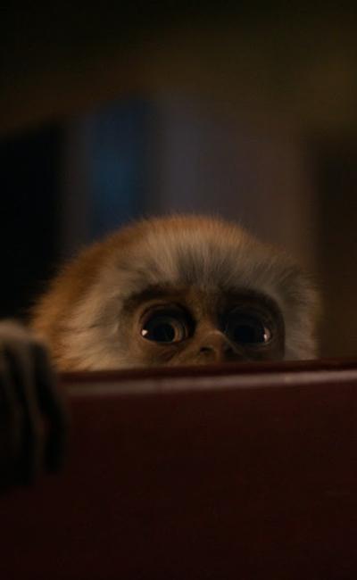 קוף | לגלאי 6+