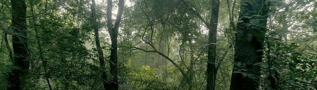 ירוק עד – יעור מחודש של אורוויל, דרום הודו | ספיריט